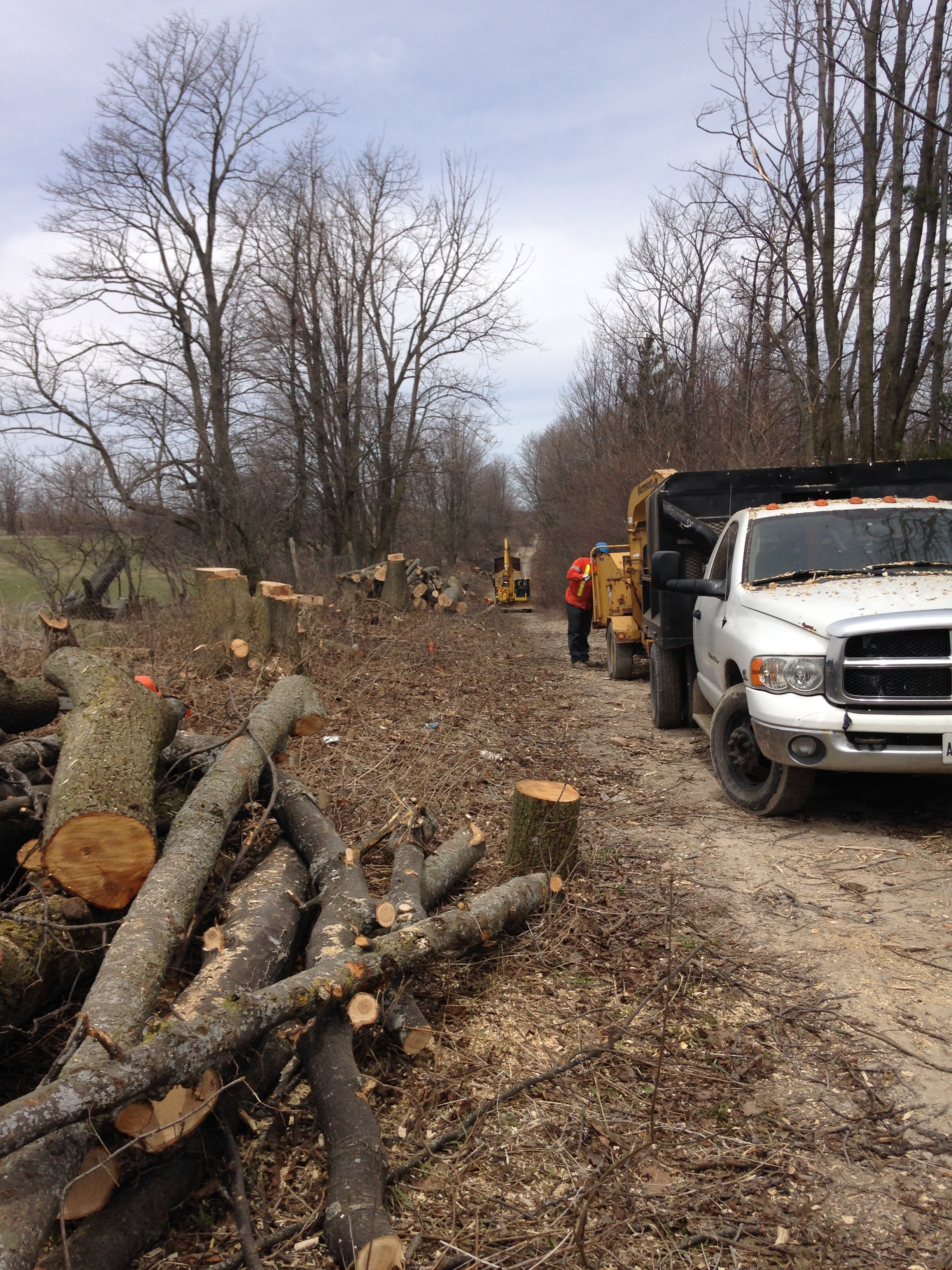 Trees being cut down along  1 km of the former old unopened road allowance and pioneer nature trail  known as Wild Turkey Road on the Oak Ridges Moraine in an area designated High Aquifer Vulnerability, a Significant Recharge zone, where two streams that support trout habitat and 12 species at risk as well as species at risk butternut trees adjacent to the Fleetwood Creek natural area are being destroyed and/or endangered to make way for new access roads for the Sumac Ridge wind facility. Photo sent to Kawartha Lakes Councillor Heather Stauble.]